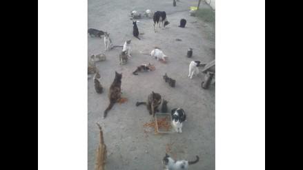 WhatsApp: abandonan decenas de animales en Los Olivos