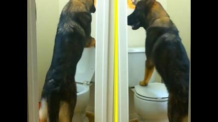 YouTube: ¿El perro más educado del mundo?