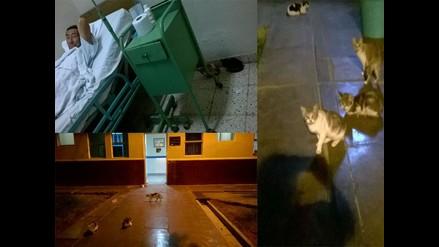WhatsApp: Gatos conviven con pacientes en Hospital de Chiclayo