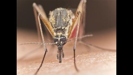 Dengue: laboratorio alista para el 2016 vacuna contra el mal