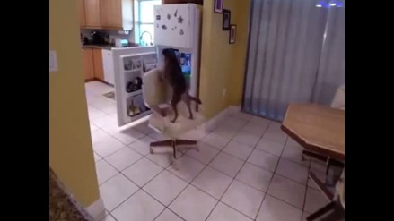 YouTube: perro roba comida de un refrigerador de una forma peculiar