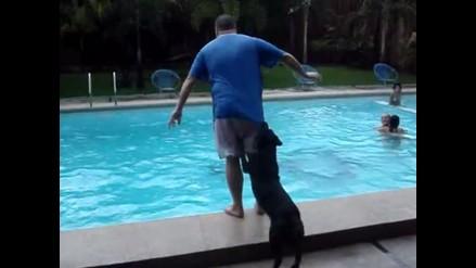 YouTube: a este perro no le gusta ver a nadie al borde la piscina