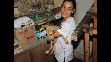 Barranco: rescatan a canes abandonados y en riesgo