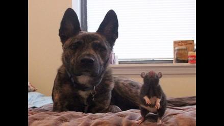 Instagram: un perro y una rata son buenos amigos