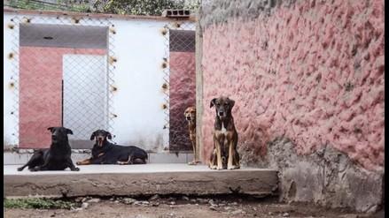 Arequipa: detectan un nuevo caso de rabia canina