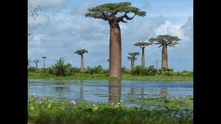 Madagascar llega al catálogo de tours virtuales de Street View