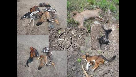 Lambayeque: matan a cinco perros y cerca de 30 aves en Callanca