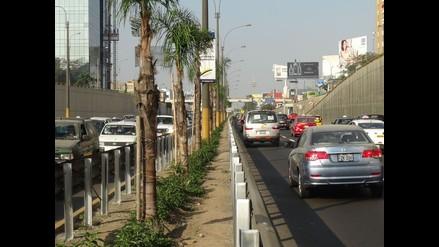 Denuncian envenenamiento de 22 palmeras en avenida Javier Prado