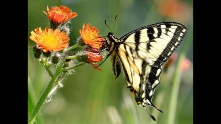 Mariposas que comen coca: nuevas armas contra narcotráfico
