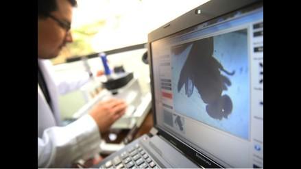 Científicos peruanos estudian cómo vencer al cáncer utilizando moscas