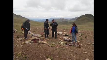 Junín: SERFOR sanciona a comunidad campesina por siembra de maca