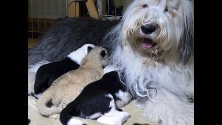 Nacieron los cachorros y ahora ¿cómo debemos actuar?