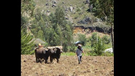 Cajamarca: agencias agrarias tendrán laboratorios de análisis de suelos