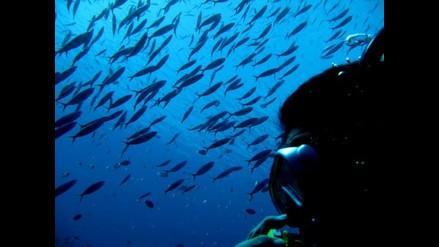 Descubren una población de peces que procrean sin sexo