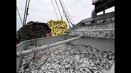 Sancionarán a embarcaciones por pescar anchoveta juvenil
