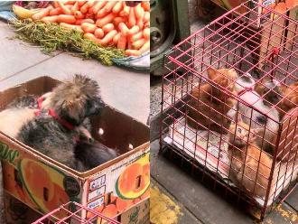 Puno: prohíben venta de perros y gatos en vía pública de Juliaca