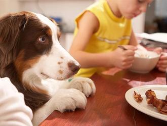 Los alimentos que nunca debes darle a tu mascota