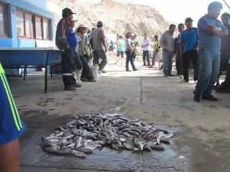 Arequipa: denuncian que embarcación depredaba recursos en La Planchada