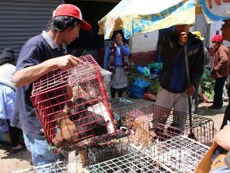 Huancayo: buscan frenar contaminación de animales domésticos