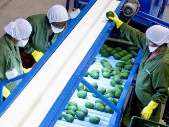 Agregados agrícolas iniciaron labores en las OCEX