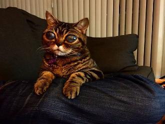 Facebook: conoce a Matilda, la gata con ojos de extraterrestre