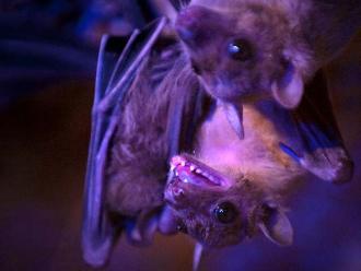 Loreto: atienden a personas con rabia humana por mordedura de murciélagos