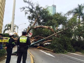 San Isidro: gran árbol cae en Javier Prado y deja atrapado a vehículos