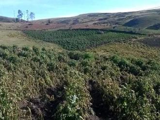 Agricultura pide S/.4 millones para afrontar heladas en Arequipa