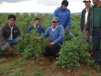 Iquitos: anuncian paquete de proyectos para apoyar a agricultores