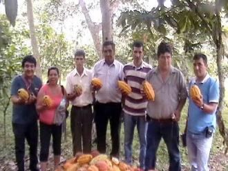 Amazonas: baguinos sembrarán cacao como lo hacen en Juanjuí