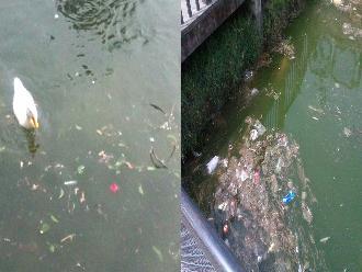 Huachipa: denuncian animales en malas condiciones en zoológico