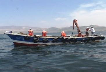 Lambayeque: Imarpe pide no pescar en zonas donde se avistan ballenas