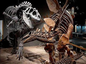 Hallan en Nagasaki colmillos del mayor dinosaurio carnívoro de Japón