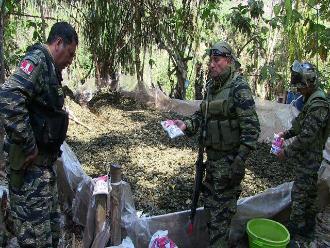 Puno: producción de coca se incrementó en San Gabán y Sandia