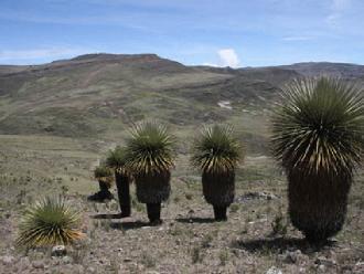 Cuatro ecosistemas a punto de desaparecer en La Libertad