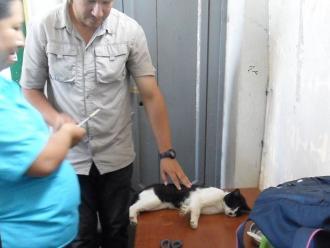 Gatos del Parque Universitario pasaron control sanitario