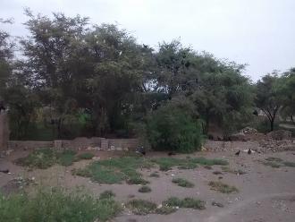 Preparan nueva caza sanitaria de gallinazos en Chiclayo