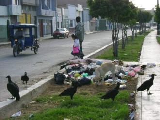 Chiclayo: Alcalde dice que solución no está en matar gallinazos