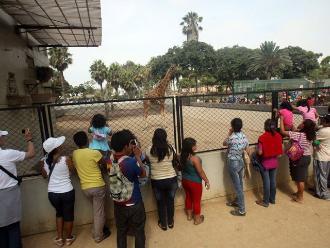 Parque de las leyendas: Confirman desabastecimiento y sacrificio de animales