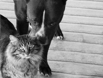España: Declaran a perros y gatos como