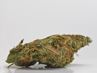 Cannabis como opción terapéutica contra fracturas óseas