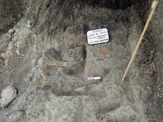 Los mamuts murieron por un abrupto calentamiento global, según estudio