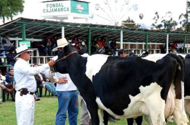 Cajamarca: con éxito se llevó a cabo Feria Fongal 2015