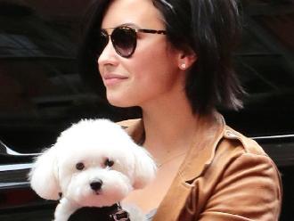 Demi Lovato devastada tras la muerte de su mejor amigo