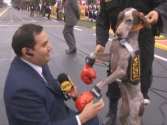 YouTube: periodista de RPP es 'golpeado' por un perro de la Unidad Canina