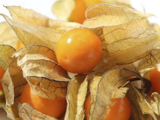 Aguaymanto, una fruta contra el envejecimiento y el estrés