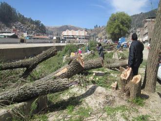 Apurímac: gran malestar en la población por tala de árboles en Andahuaylas