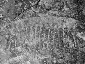 Encuentran fósil que demuestra reproducción en organismos complejos