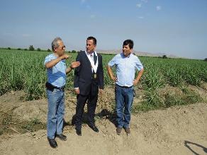 Chiclayo: Juez Tenorio verificó los campos de la empresa Pucalá
