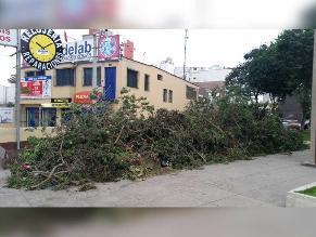 WhatsApp: restos de poda representan un peligro en Surquillo